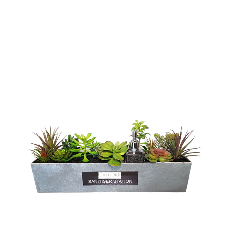 large succulent sanitiser station